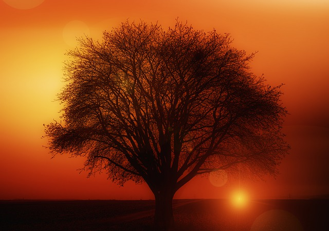 Sunset Weather Mood Clouds Solitary Tree